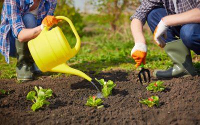 15 trucos de horticultura